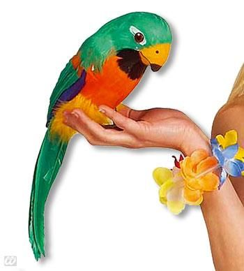 Feathered Parrot Green and Orange