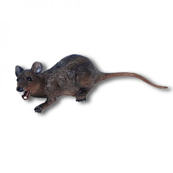 Overhead Latex rat
