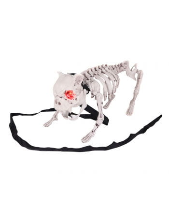 Barking dog skeleton