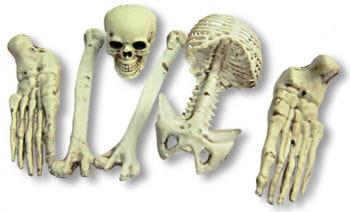 Plastic Skeleton Parts Small