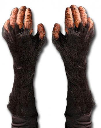 chimpanzees gloves