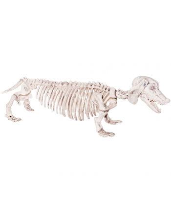 Skelett Dackel aus Kunststoff