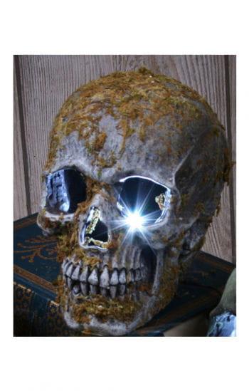 Stroboskop Totenkopf moosbedeckt